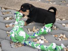 Hračka pre šteniatka - foto postup
