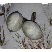 slepačie vajíčka