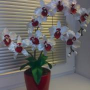 Saténová orchidea