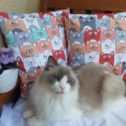 mačičky:))návliečky na vankúšiky