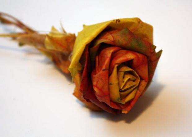 Fotopostup na ruže z javorového lístia 1
