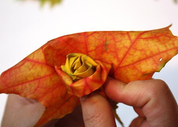 Fotopostup na ruže z javorového lístia 13