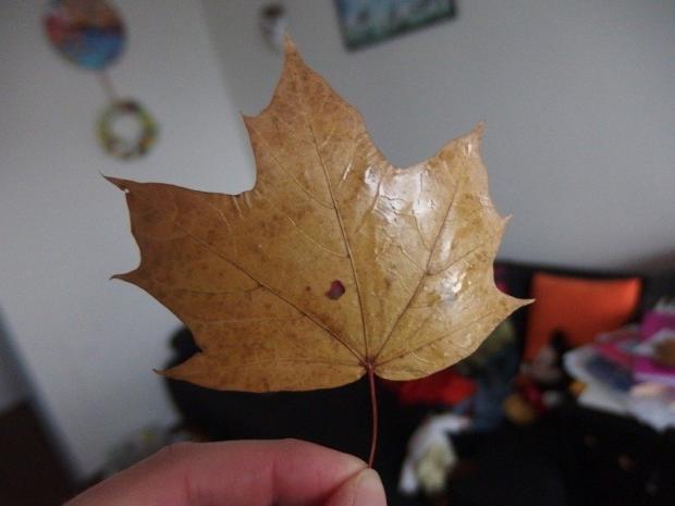 Dáždnik z voskovaných listov  4