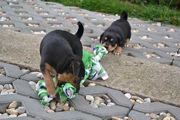 Hračka pre šteniatka