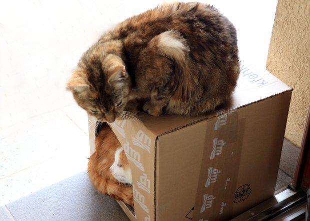 Škrabadlo pre mačky z kartónu 7
