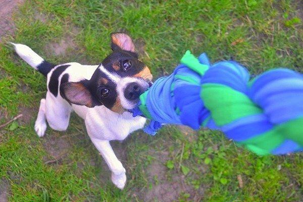 Hračka pre psa z vyradených tričiek 9