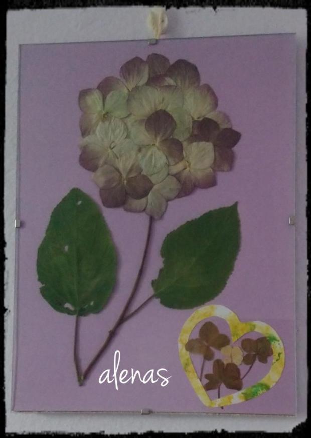 Hortenzia, Obrazy a obrázky