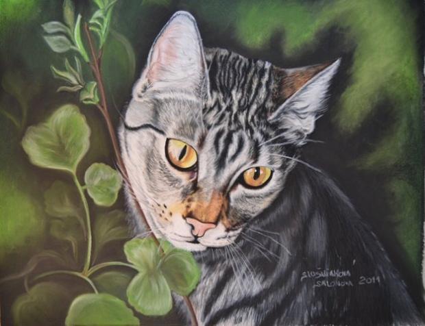 Obrazy krásne mačička