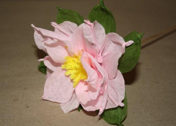 Fotopostup na kvety z krepového papiera