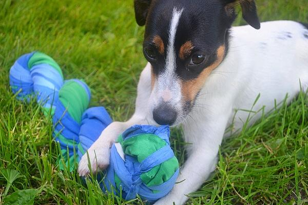 Hračka pre psa z vyradených tričiek - foto postup